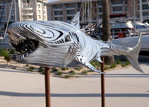 Requin 3.jpg