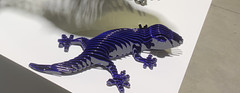 Rina Gecko, Candy Blue ...