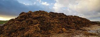 vermi-solutions-compost-banner.jpg