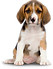 11-dog-png-image.png