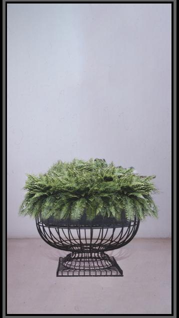 Fern Grandiosa Planter