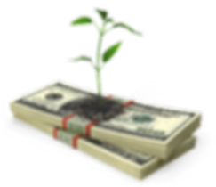 money-stack-and-sprout.png