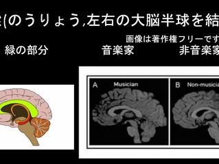 ピアノは脳に良い影響を与える その1 ピアノは脳全体を使う?