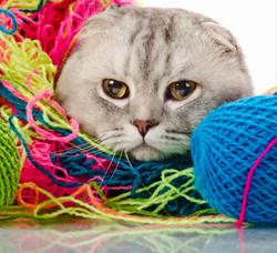 Cat in Yarn_edited.jpg