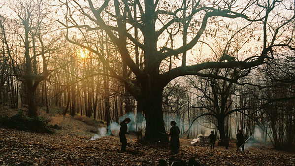 Stories from Chestnut Woods.jpg