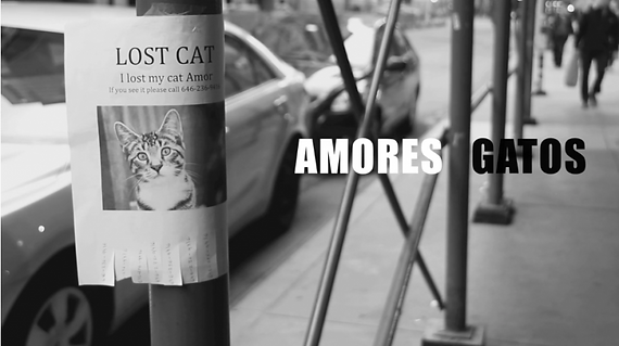 Amores Gatos-Still.png