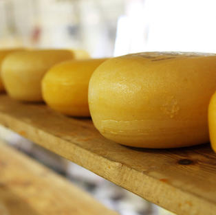 French Cheese Flavor