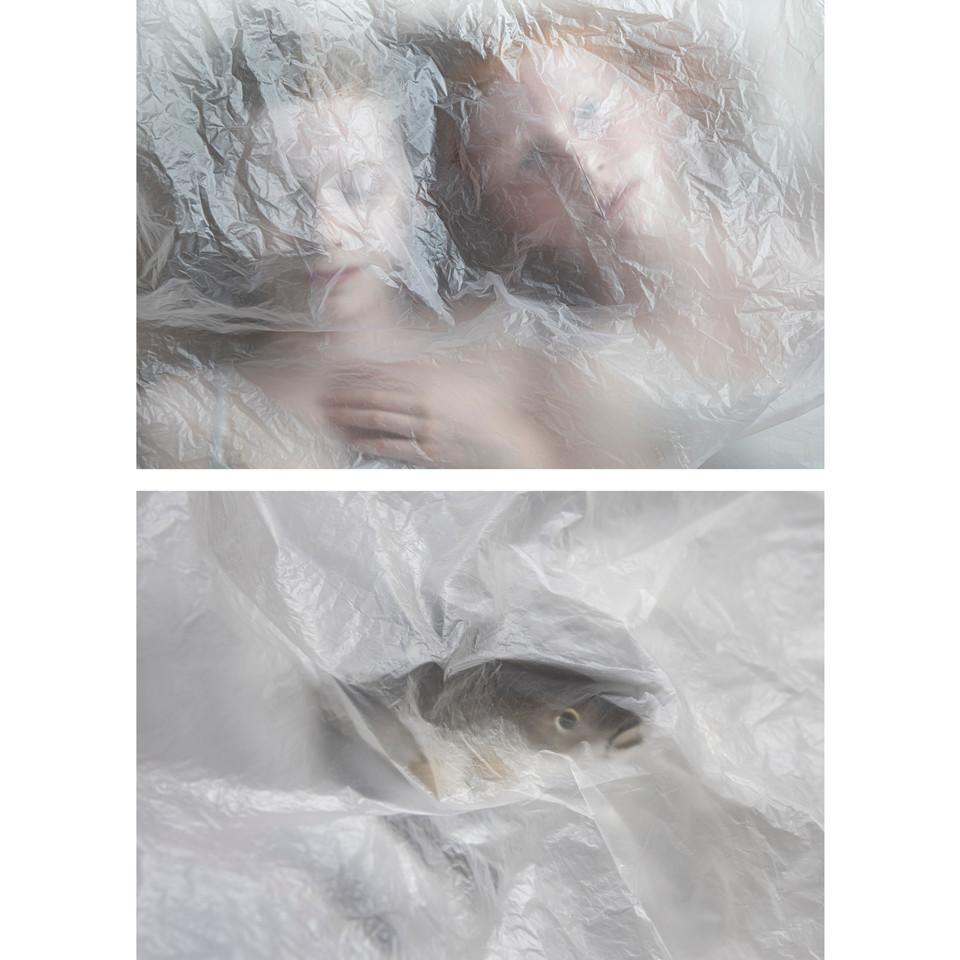 fish-6.jpg