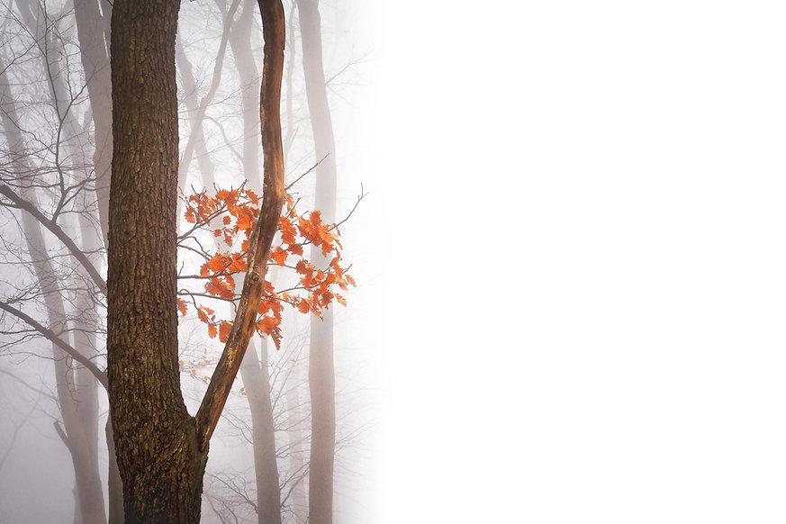 Forêt Misty