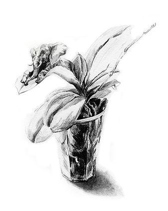 litografi, elefant, tegning