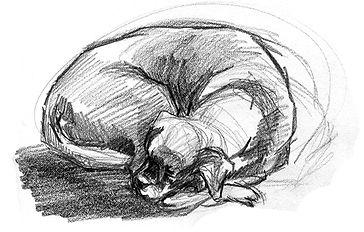 tegnekurs, tegning av hund