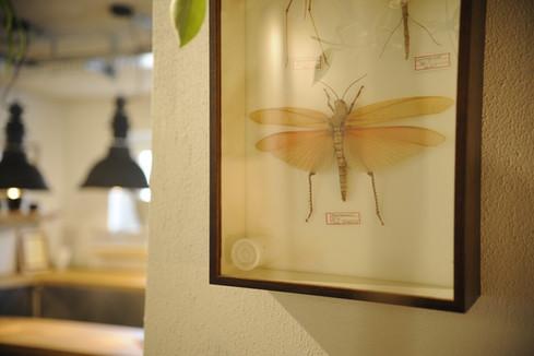 18 Bild Schmetterling gr.jpg