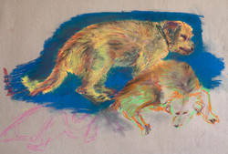 Atelierhund