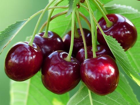 cherry-sweet 167341_960_720_edited.jpg