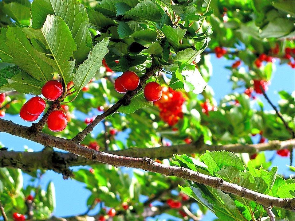 cherry-tart%20212601_960_720_edited_edited.jpg
