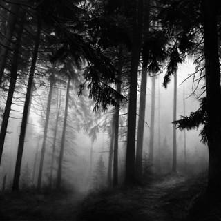 Untitled (Fairmount Forest