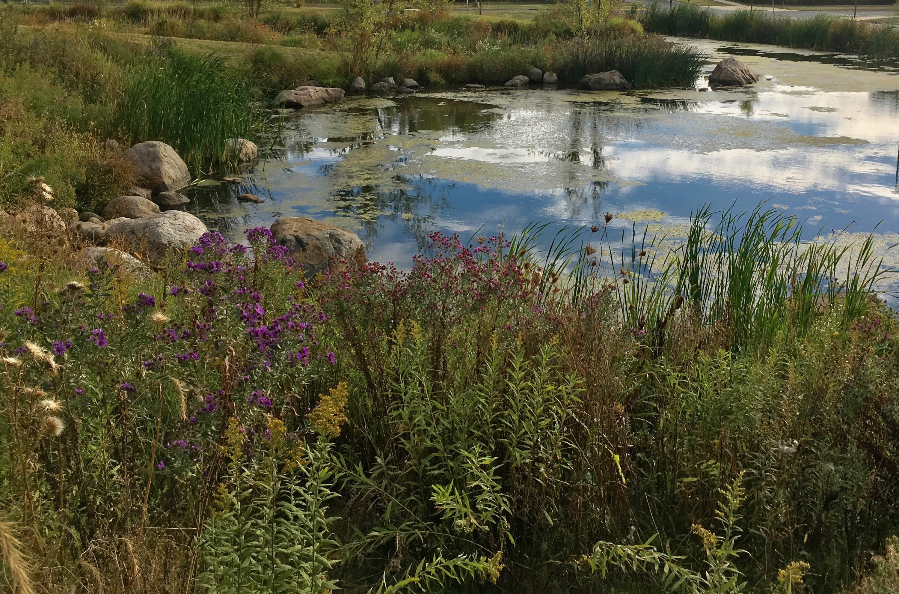 Future pond and wetlands environment