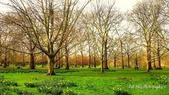 Green Green Park_wm.jpg