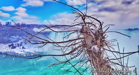 icicle tree - Niagra Falls_wm.jpg