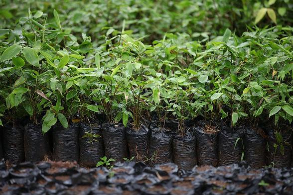 Global Bamboo Experts