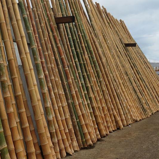 EcoPlanet Bamboo Plantation Nicaragua.JP
