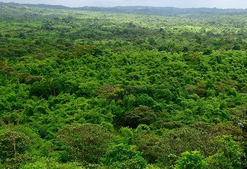 EcoPlanet Bamboo Nicaragua 2020.jpg
