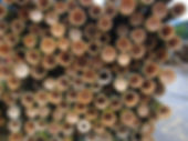 EcoPlanet Bamboo Ghana