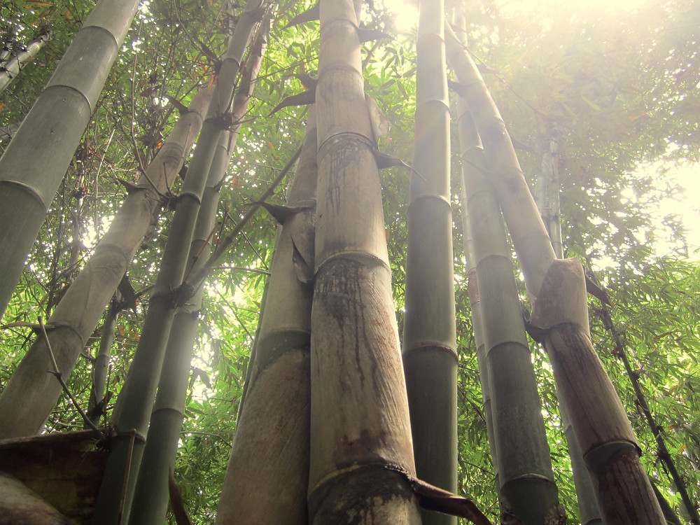 EcoPlanet Bamboo's farms are grown only on degraded land.