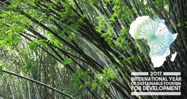 EcoPlanet's Bamboo Plantations