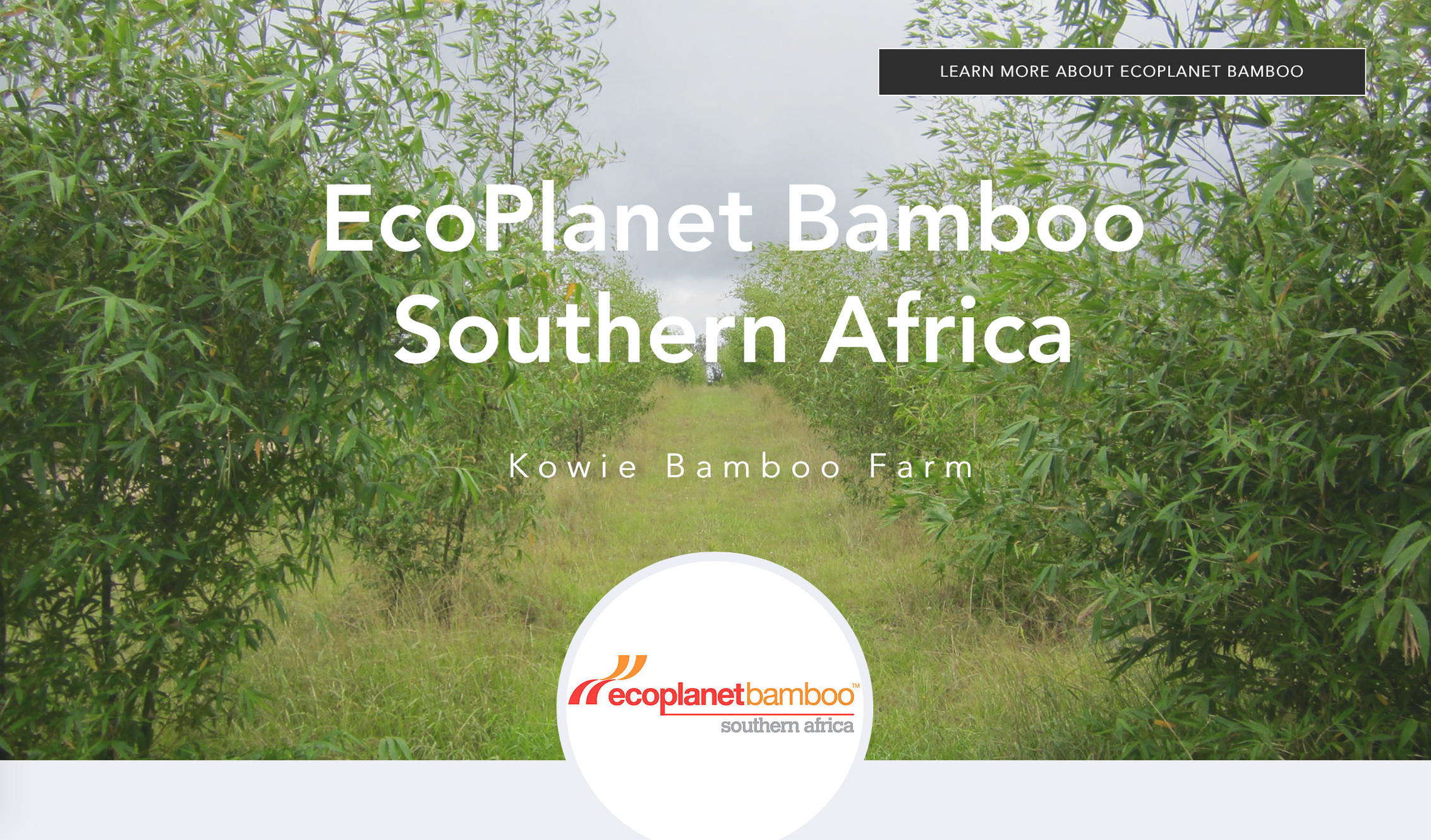 EcoPlanet Bamboo South Africa   Bamboo Plantations