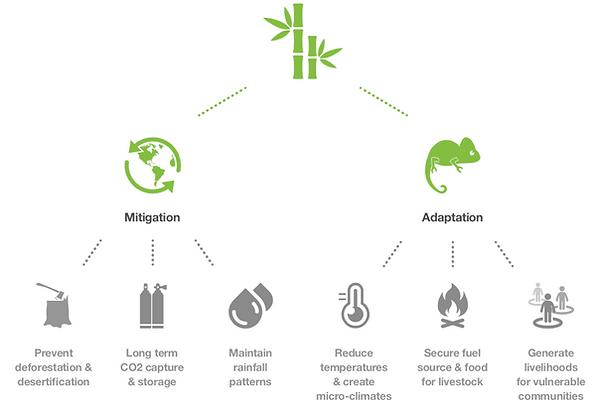 Bamboo Carbon Credits.png