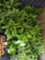 planten muurtuin