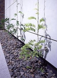 klimhulp planten