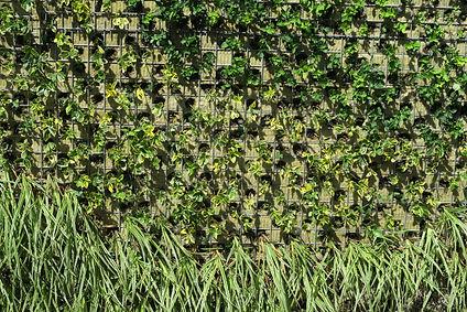 planten groene gevel
