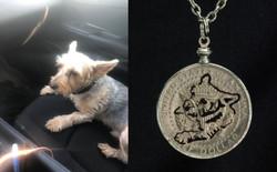 dog picture - Copilot