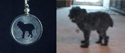 dog picture - Profile