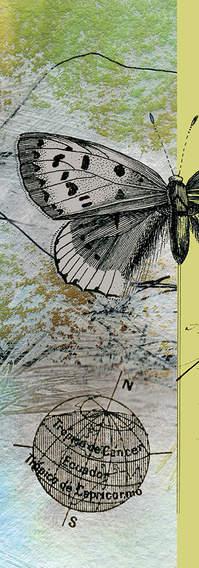 04 butterfly, dresden