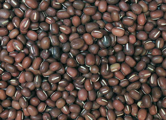 Pilgrims Coffee Whole Beans