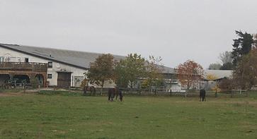 Pferde Hof1.png