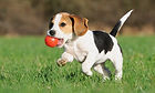 Puppy-exercise-and-play-with-ball.jpg