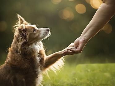 dog-animals-photography-wallpaper-previe