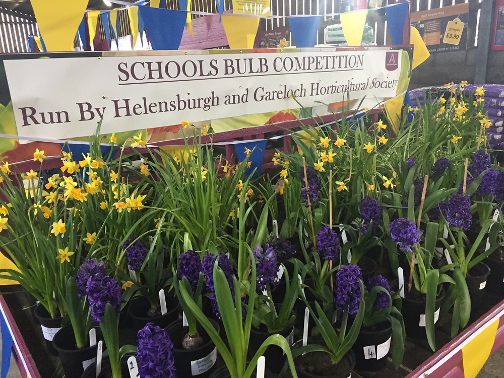 Schools' Bulb Competition