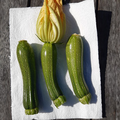 Runner up - Courgette Class