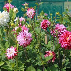 The Horti's Gardening Calendar - August