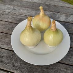 Runner up - Onions Class