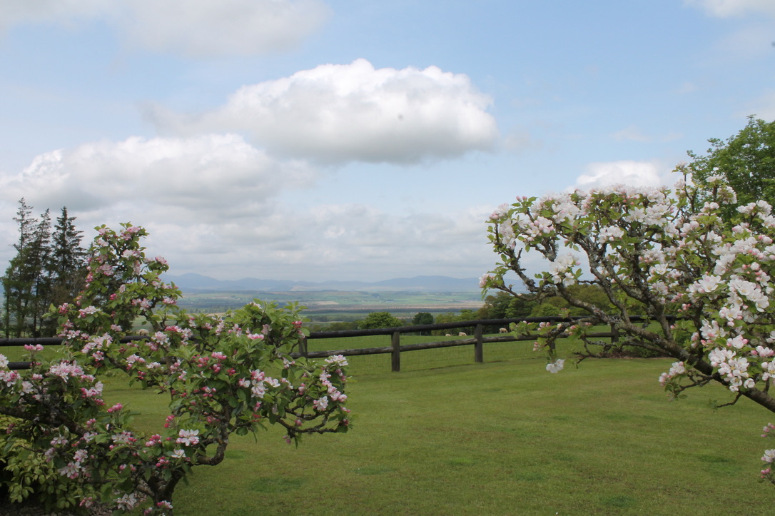 Stunning views from Thorntree