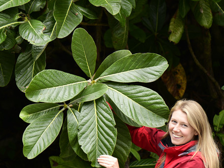 Kirsty Wilson, Royal Botanic Garden Edinburgh- Evening Talk 10th February