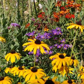 The Horti's Gardening Calendar - September