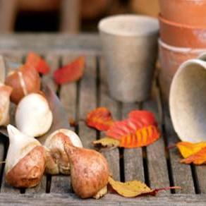 The Horti's Gardening Calendar - November