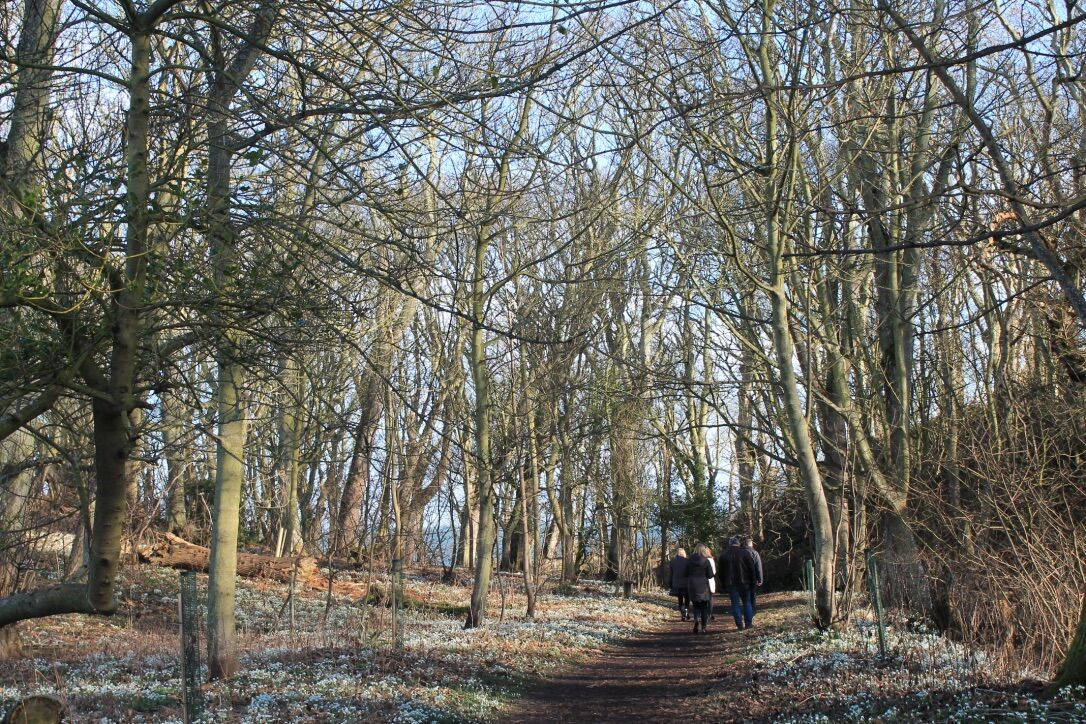 woodland walk to the shore